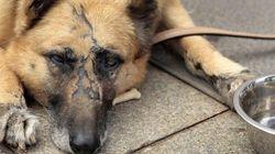 Detenidos cinco menores que maltrataban animales y lo difundían por