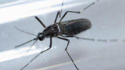¿Hay riesgos de que el Zika llegue a