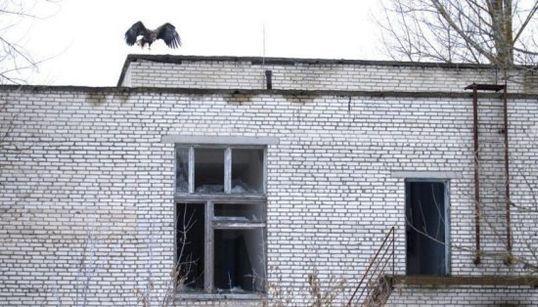 Los dueños de Chernóbil ahora son los
