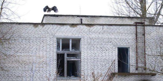 30 años después del desastre de Chernóbil, los dueños de la tierra son los