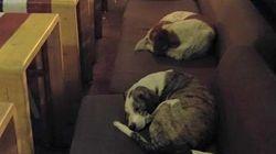 Un café de Grecia abre por las noches para acoger perros