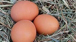 El sencillo gráfico que responde a la pregunta de si fue antes el huevo o la
