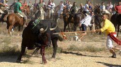 La Junta de Castilla y León prohíbe matar al Toro de la