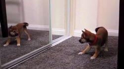 La sorpresa de perros y gatos al verse en el espejo