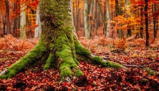 Los colores del otoño en