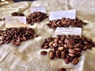 Historia de un café en Panama llamado Finca