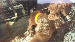 Julia Otero denuncia la inacción de los Mossos tras encontrar a tres perros