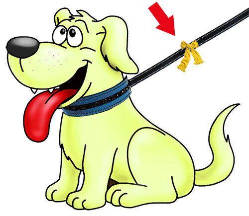 Los perros, sobre todo los amarillos, necesitan su