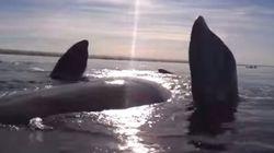 Una ballena eleva en el aire el kayak en el que navegaban