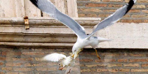 Las palomas de la paz... atacadas por una gaviota y un cuervo