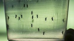 Se elevan a 279 los casos de Zika en
