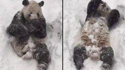 Pura felicidad: el oso en la nieve que conquista a 45 millones de