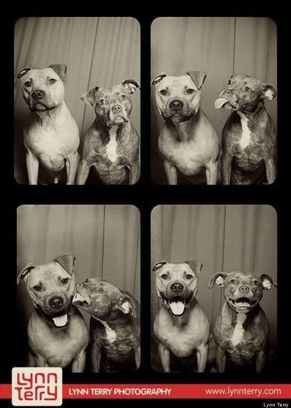 Imagina que metes a tus perros en un fotomatón