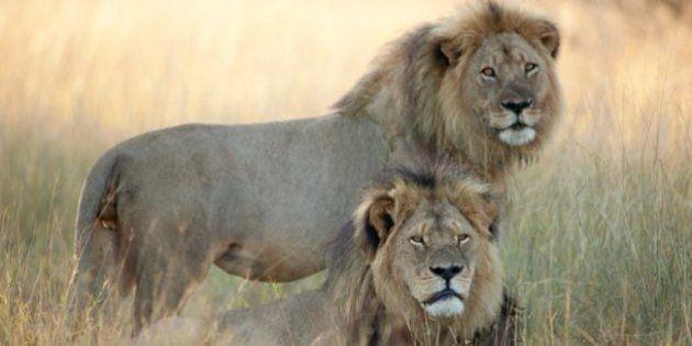 Las autoridades dan por muerto a Jericó, el hermano del león