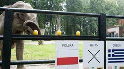 El 'pulpo Paul' de la Eurocopa es una elefanta