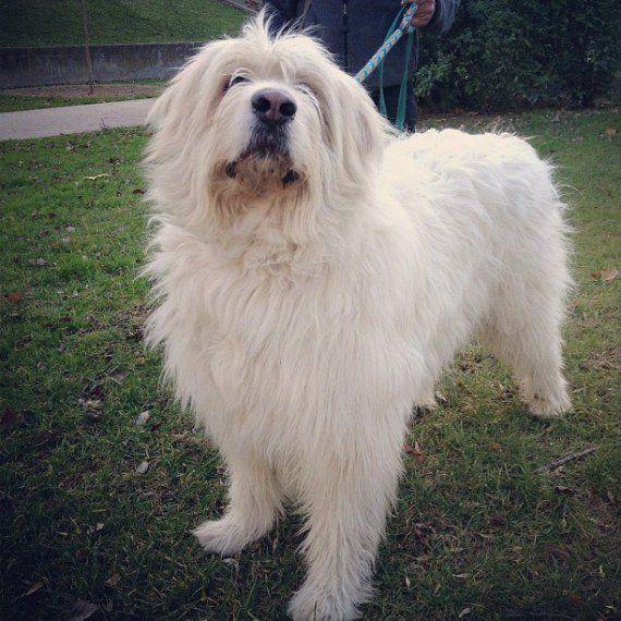 La muerte del perro Lucky por un disparo de la policía indigna a Zaragoza