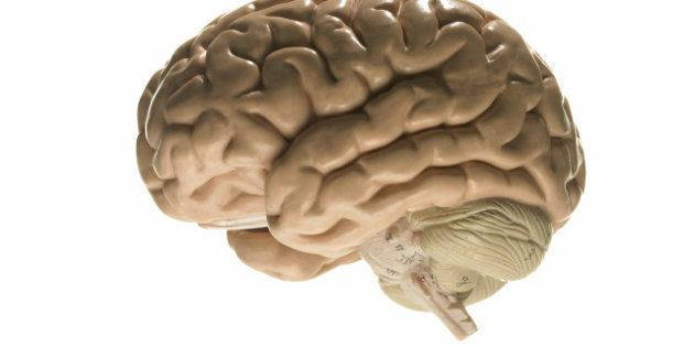 Funcionamiento del cerebro: así es su sistema de limpieza, según un estudio