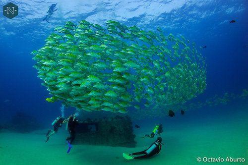 Ecoturismo marino: la riqueza de los océanos más allá de las