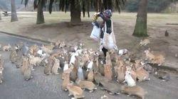 ¡Corre! ¡Salva tu vida! ¡Te persiguen decenas de conejos