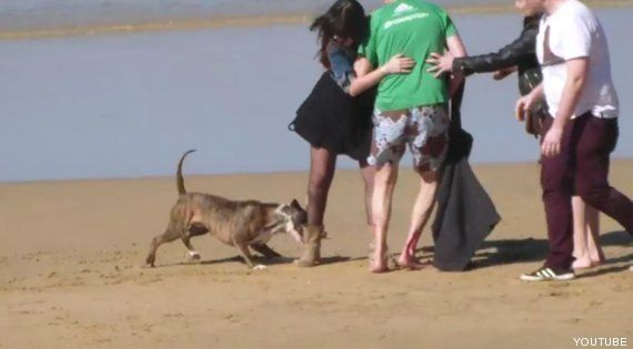Ataque de un perro en la playa de San Sebastián: el acalorado debate en