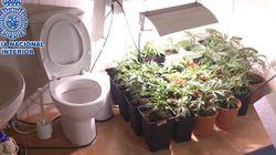 Un invernadero de marihuana en el WC