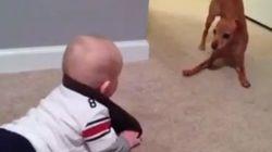 Bebé intimidando a perro