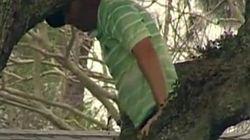 Sergio García subido a un árbol... para golpear una bola