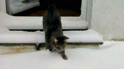 Es lunes... pero puedes sonreír: gato conoce la nieve