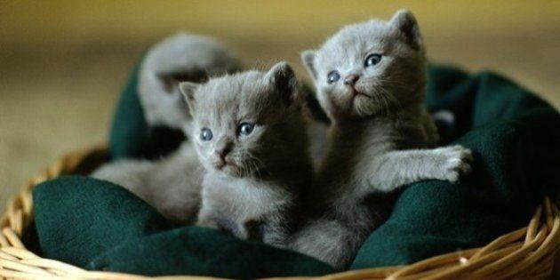La domesticación de los gatos comenzó en China hace 5.300