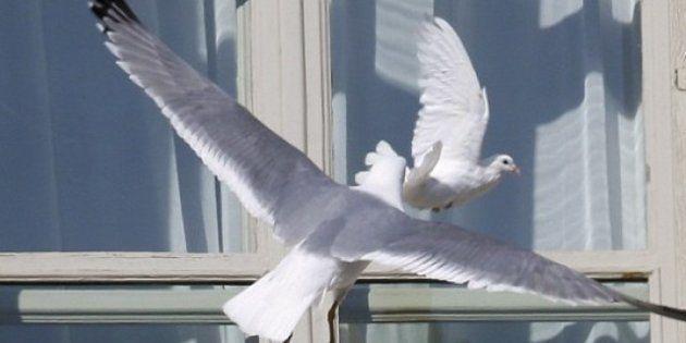La paloma de la paz liberada por el papa, atacada por una