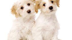 15 vídeos de perros para celebrar que queda menos para el