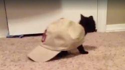 Gatos que se creen