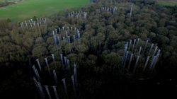 El bosque que ayuda a luchar contra el cambio