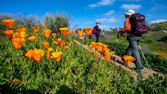 ANAHEIM HILLS, CA - MARCH 12: Hikers make their way past blooming California poppies along the Old Weir Canyon Trail in Santiago Oaks Regional Park in Anaheim Hills on Wednesday morning, February 27, 2019. Photo by Mark Rightmire/MediaNews Group/Orange County Register via Getty Images
