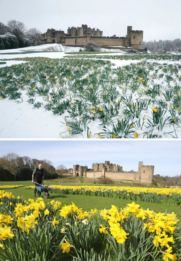 Alnwick Castle in Northumberland today (top) and this time last year