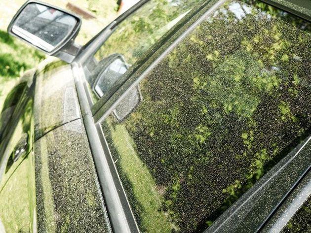 花粉の付着した車のボディのイメージ画像