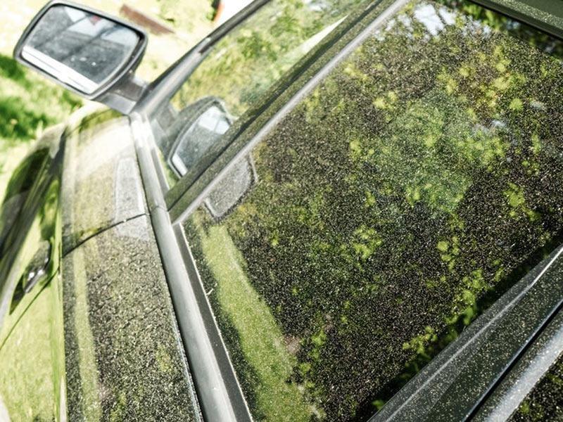花粉の大量飛散で自動車にもダメージ。付着を防ぐ3つの方法とは?