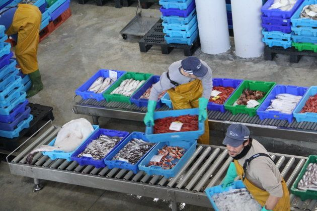 Empleados de la cofradía reparte el pescado subastado en lonja de Santa Pola a sus