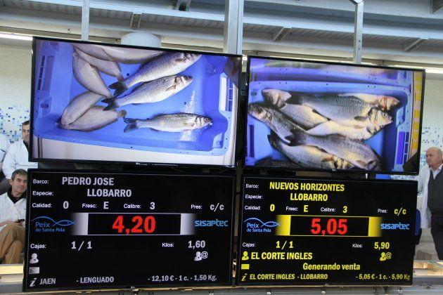 Las pantallas de la subasta de la lonja de Santa Pola. Los pescateros pujan por cajas de