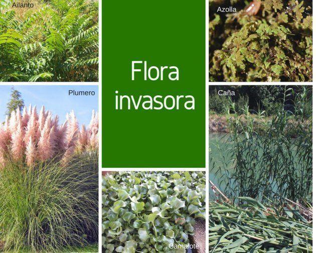 Flora invasora en