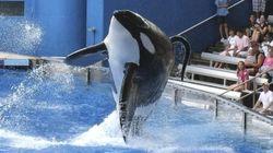 SeaWorld anuncia el fin de los espectáculos con