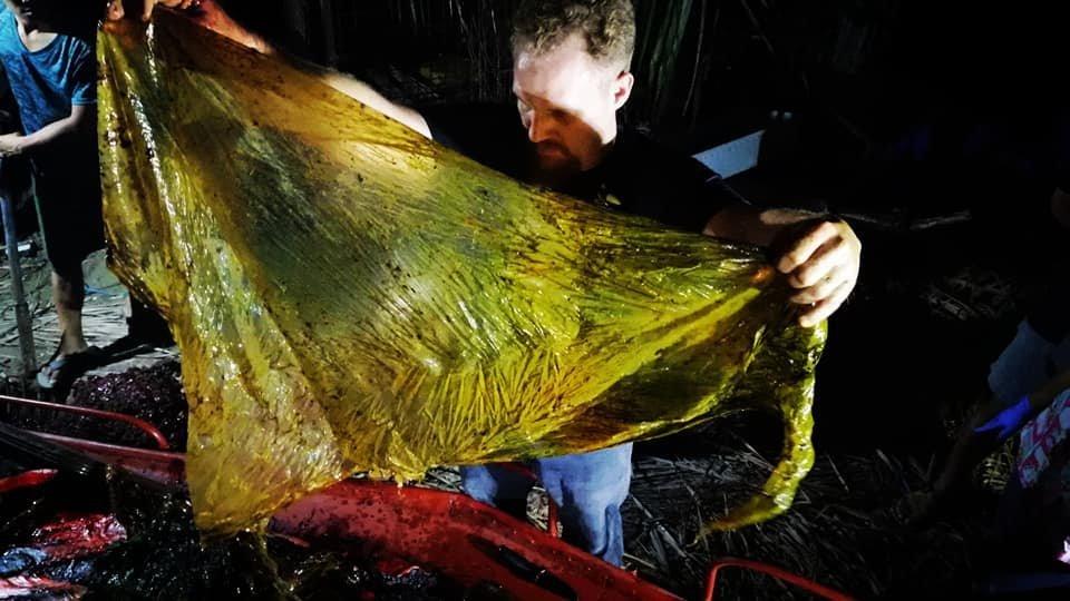 Φάλαινα υπέστη φρικτό θάνατο από γαστρικό σοκ - Βρέθηκαν 40 κιλά πλαστικές σακούλες στο στομάχι