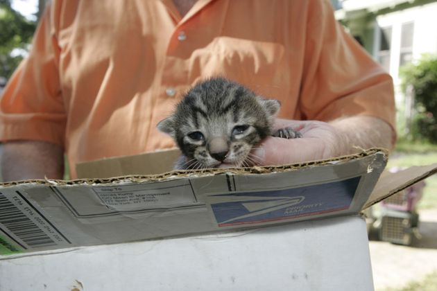 Ρέθυμνο: Σκότωνε γάτες και πόσταρε συνταγή για φόλα στο