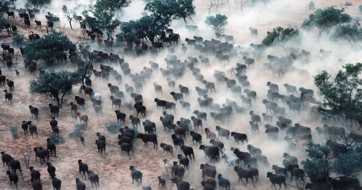 Der Kollaps der Ökosysteme ist ein noch größeres Problem als der Klimawandel