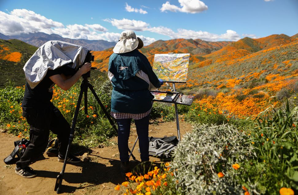 A man photographs a woman painting a super bloom of wild poppies blanketing the hills of Walker Canyon near Lake Elsinore, Ca