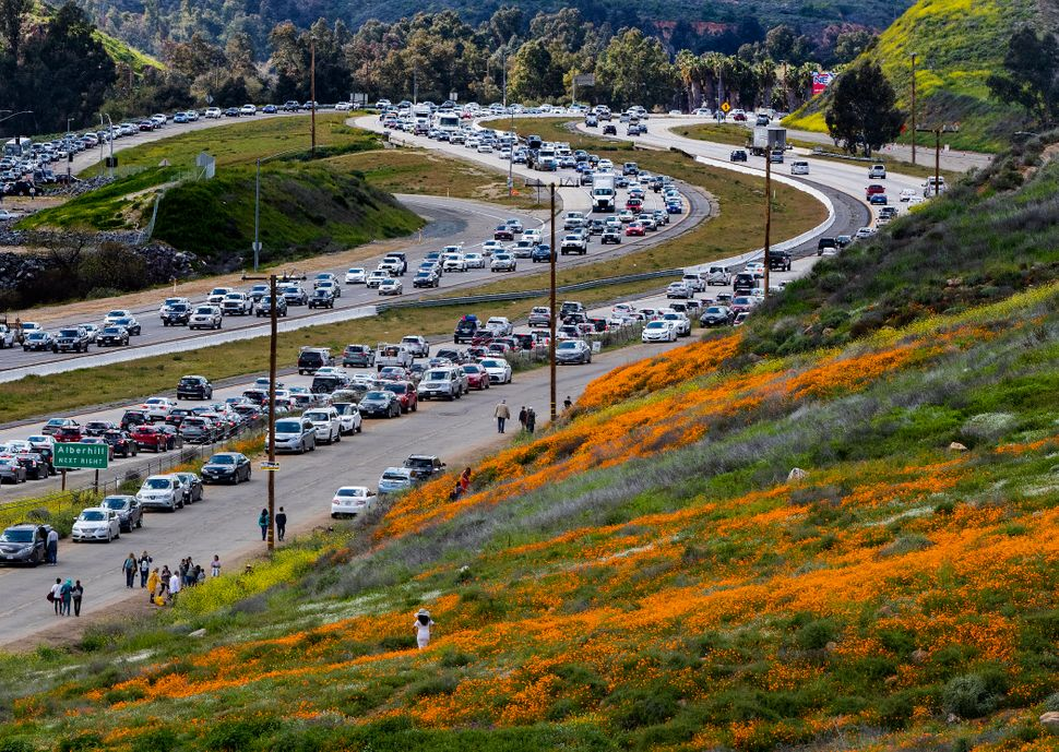 The super bloom creates a traffic jam along the I-15 freeway as wildflower enthusiasts wait to exit toward Walker Canyon in L