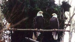 Οπου φλερτάρουν οι αετοί: Μία σαπουνόπερα στην πρωτεύουσα των