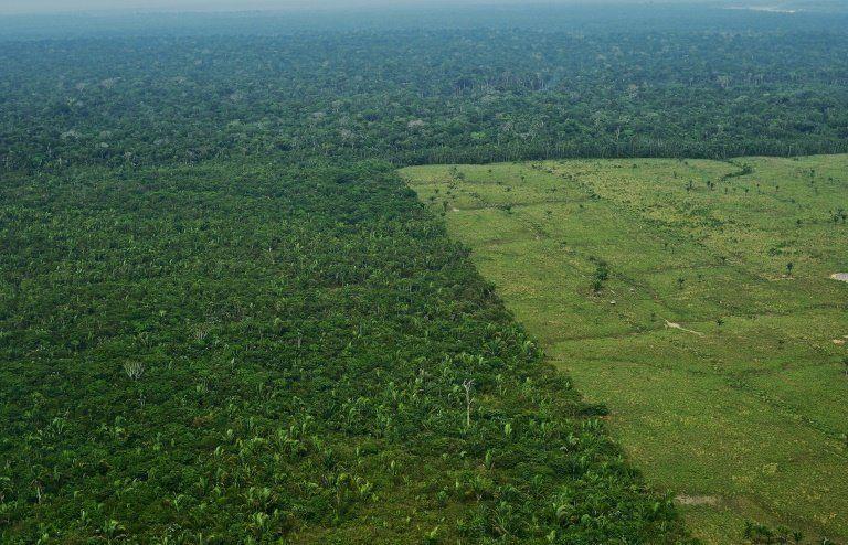 브라질 아마존 서부 지역의 숲 벌채를 보여주는 항공