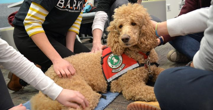 I Oversee A Dog Therapy Program On A College Campus. Here's What I Have Learned.