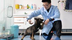Κίνα: Κλωνοποίηση αστυνομικού σκύλου για να μειωθεί ο χρόνος